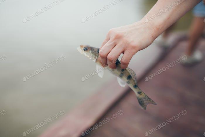 Angeln. Fisch in den Händen Nahaufnahme. Fische fangen