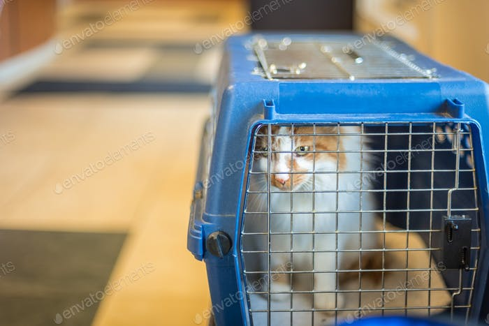 Cat in carrier at airport