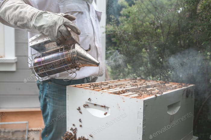 A beekeeper blowing smoke over a honey bee hive