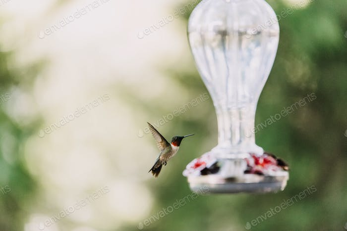 A hummingbird at a glass feeder
