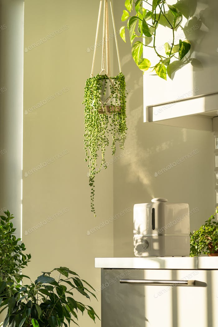 Humidifier during heating period at home surrounded by houseplants, steam from diffuser. Plant care