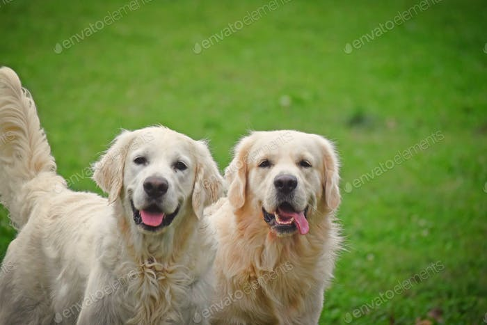 💖NOMINATED💖 Hi there! Smiling doggies