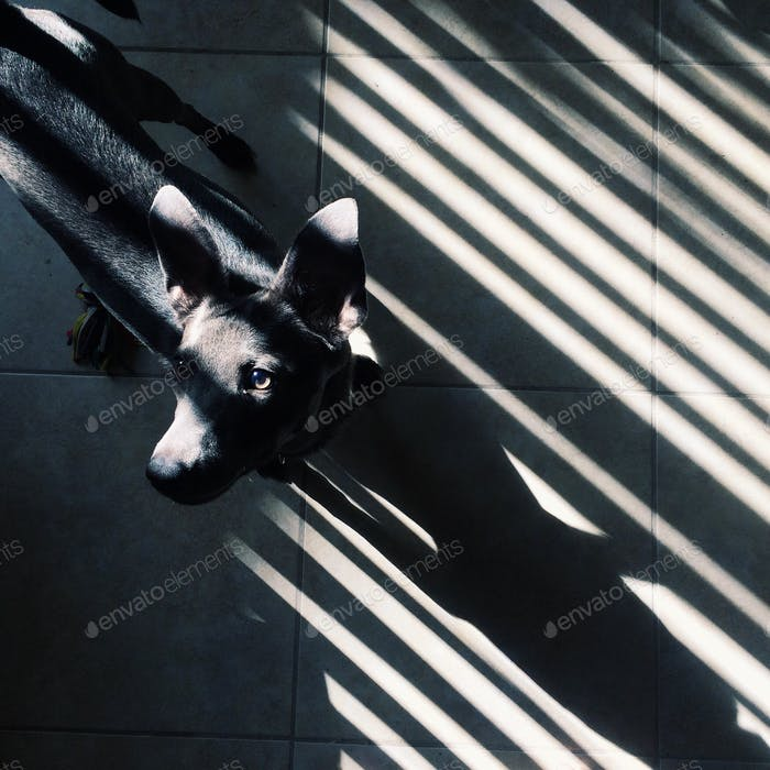 Our pup likes light and shadows too! 🐾