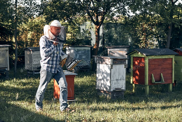 Beekeeper working in apiary. Real people, authentic situations
