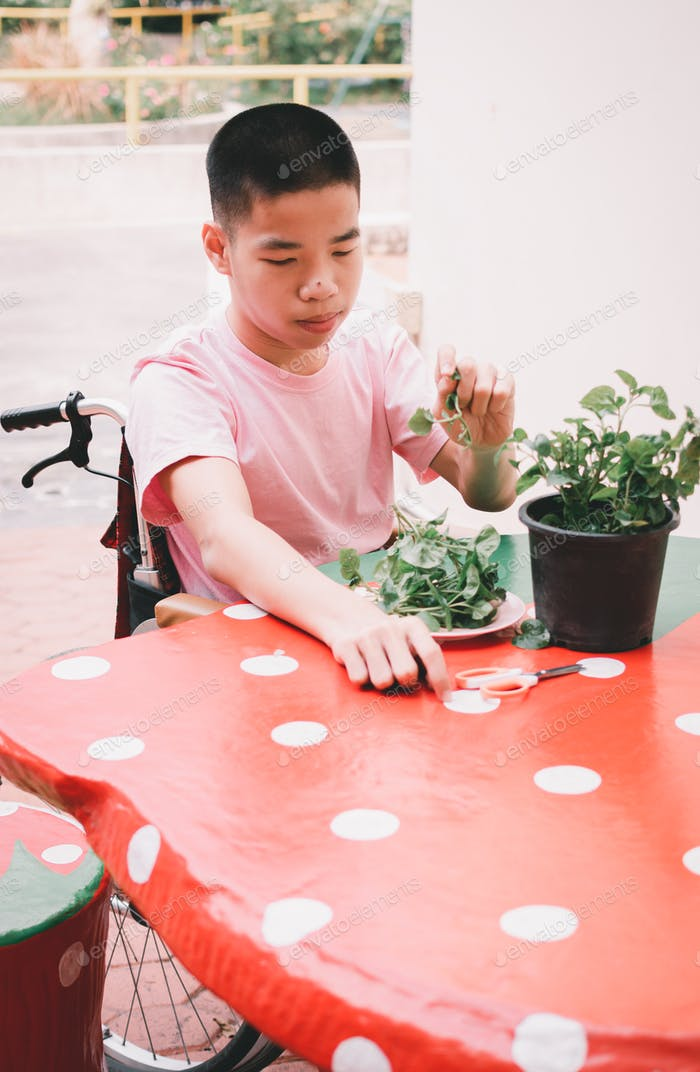 Asian special child on wheelchair and the plants, Development activities and relationships family