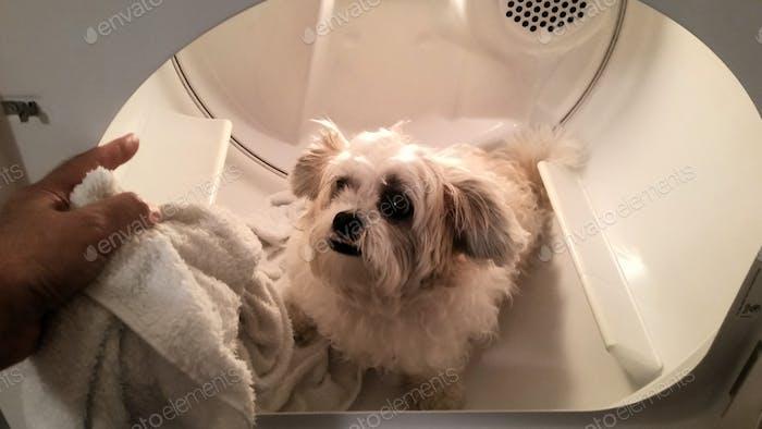 Fuera de mi pequeño ayudante... primero la lavadora y luego la secadora...