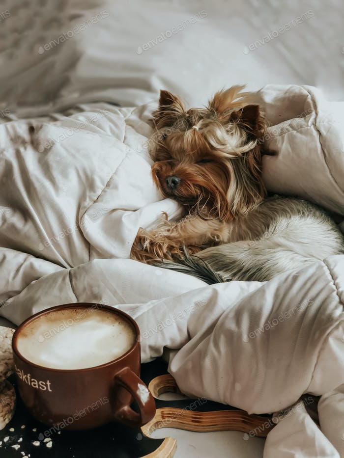 Little dog watching sleepy dreams