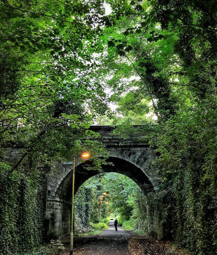 A man admires the green canopy overhead as he walks along a quiet path in Edinburgh Scotland