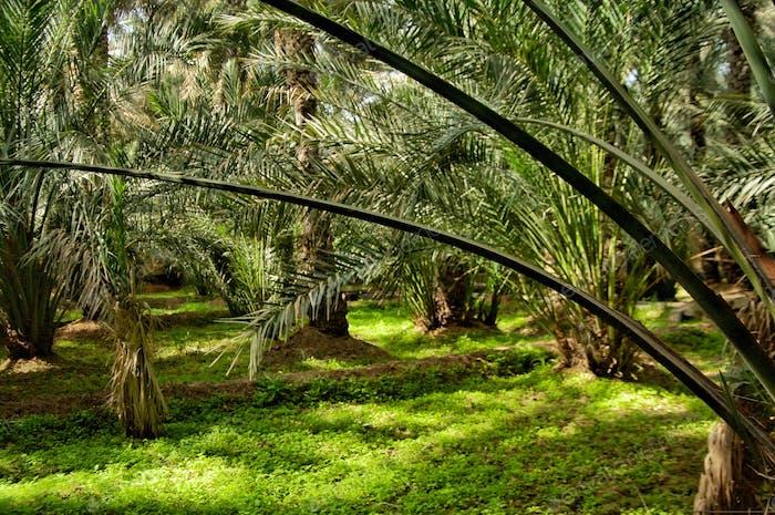 Tropical Oasis Al Ain Oasis