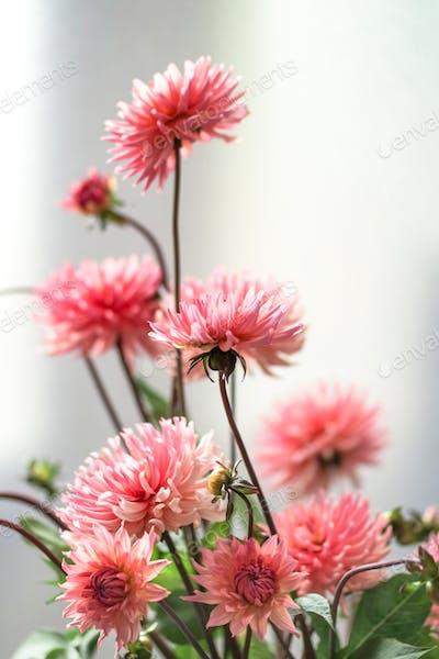 Dahlia bouquet.