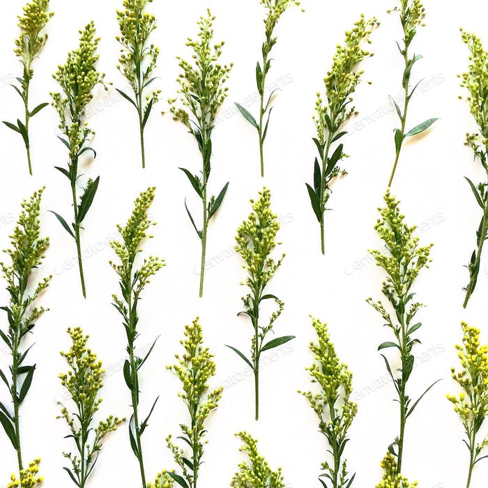 Pattern of yellow goldenrod flowers on a white background