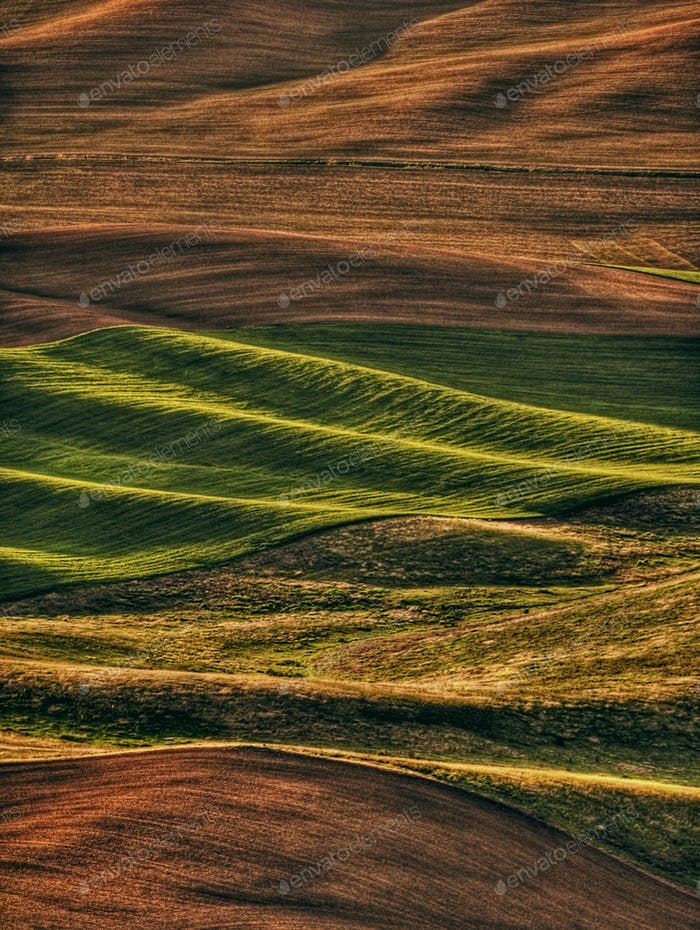 Wheat fields in the Palouse Washington State in afternoon light.