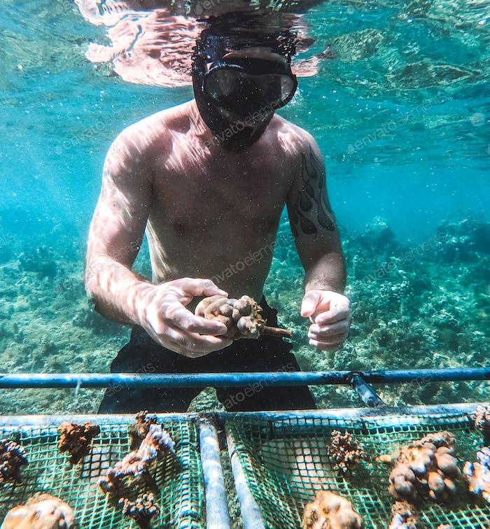 Planting corals