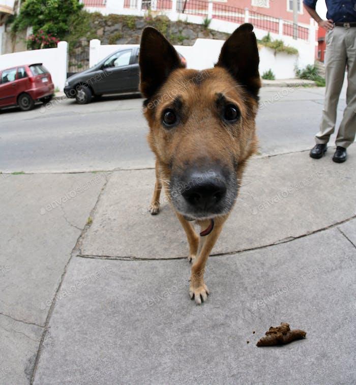 Hund mit Hundekot auf einem Bürgersteig.