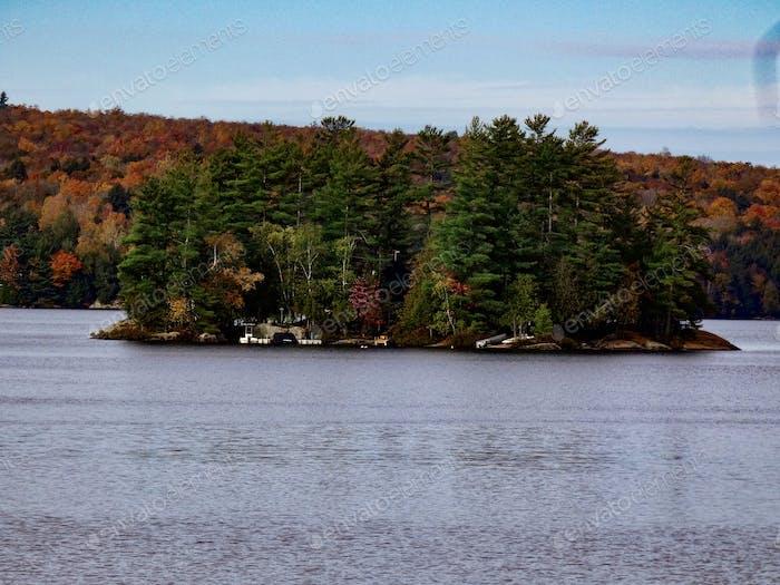 Pine tree island