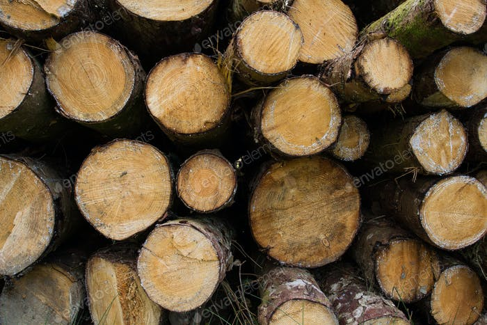 A pile of freshly cut trees in a timber, forestry or lumber environmental background image