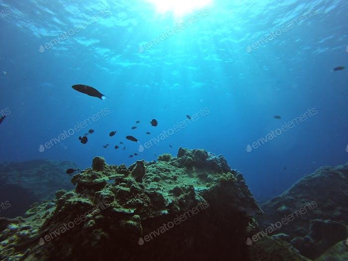 Corals and marine life Underwater