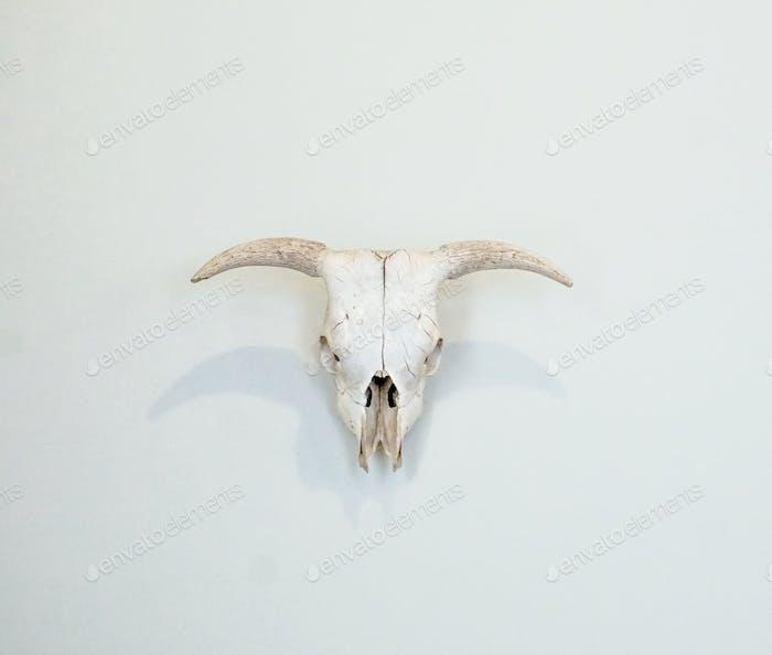 Lenken Schädel mit Hörnern