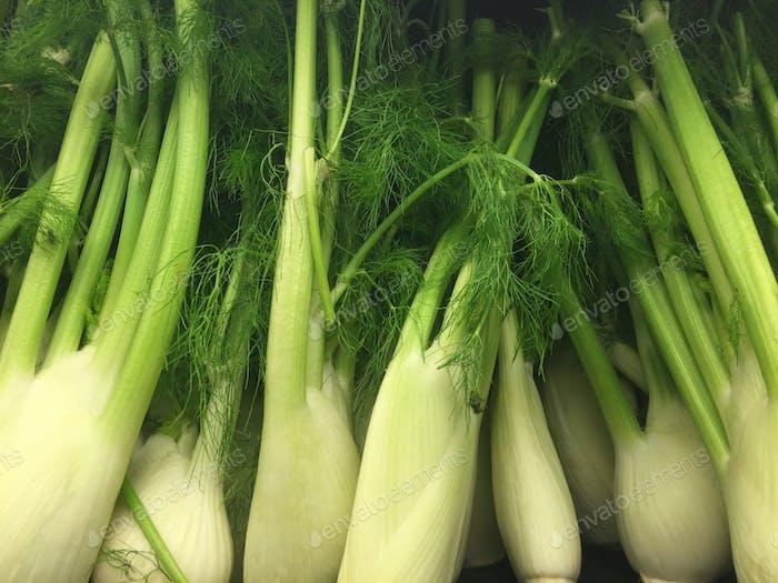 Wispy looking fennel