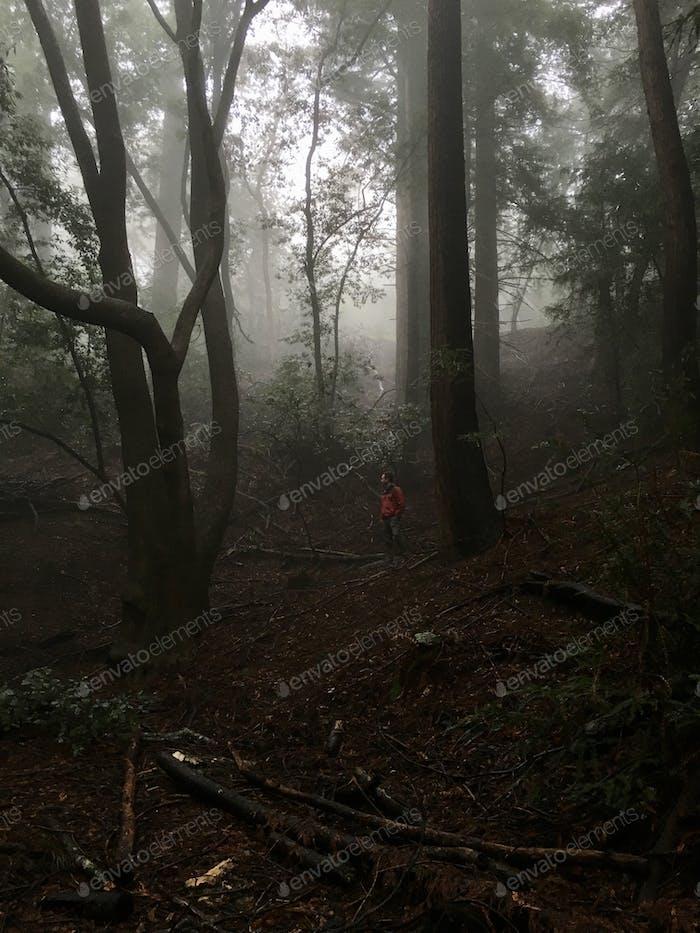 Ein Mann im Redwood-Wald