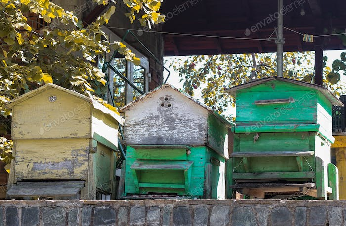 Green bee hives