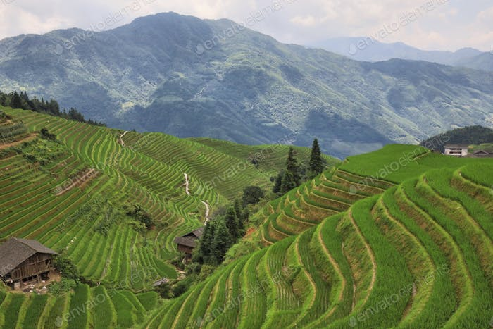 China rice terraces, Guilin...