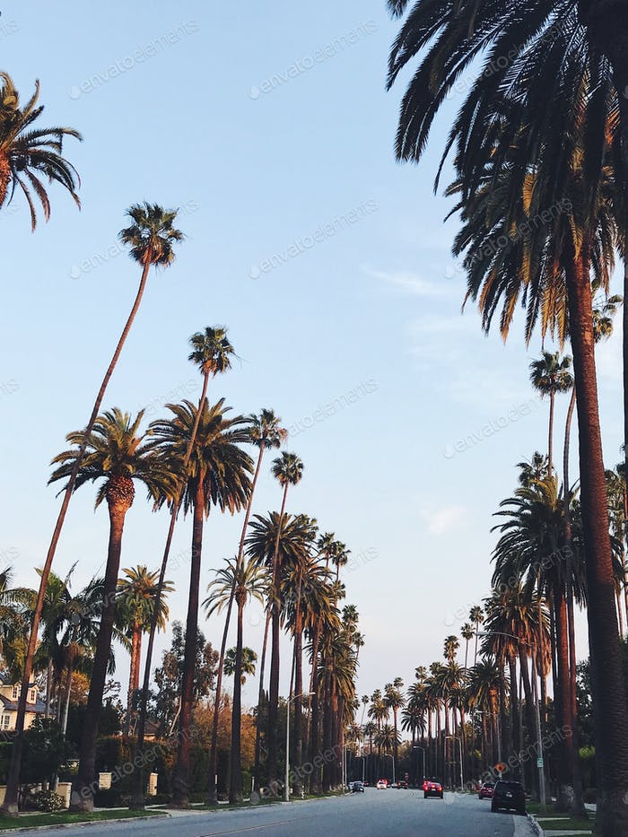Palm avenue in Los Angeles  - NOMINATED 🌴🙌🏼 -