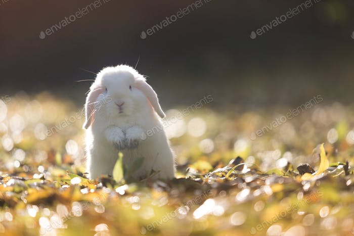White Easter bunny in the garden