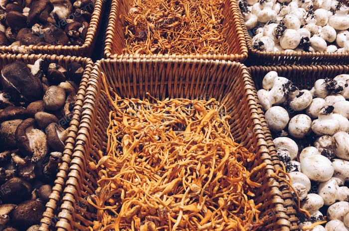 Edible Fungus For Sale