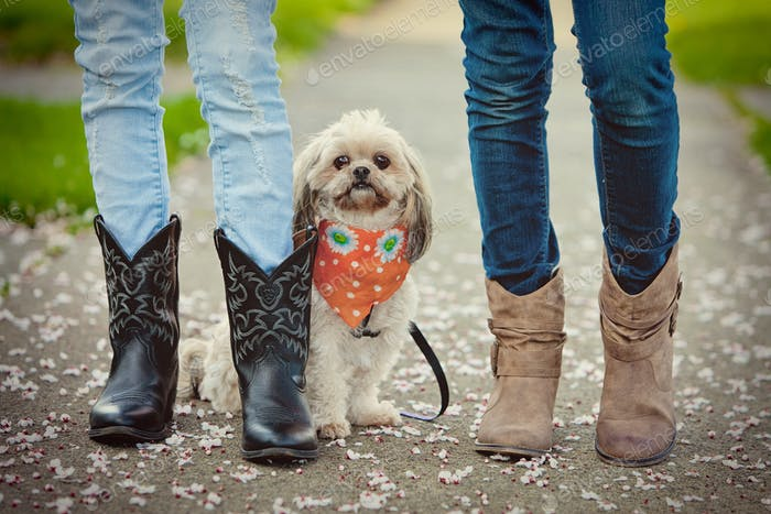 dog and cowboy boots