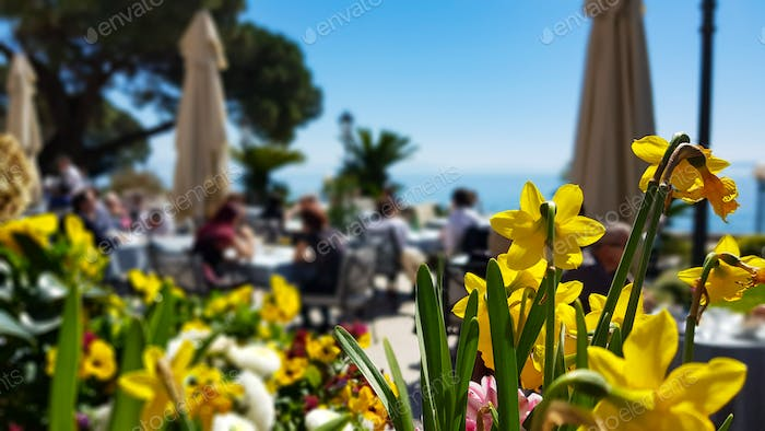 Flowerbed with yellow daffodils in bar restaurant by sea.