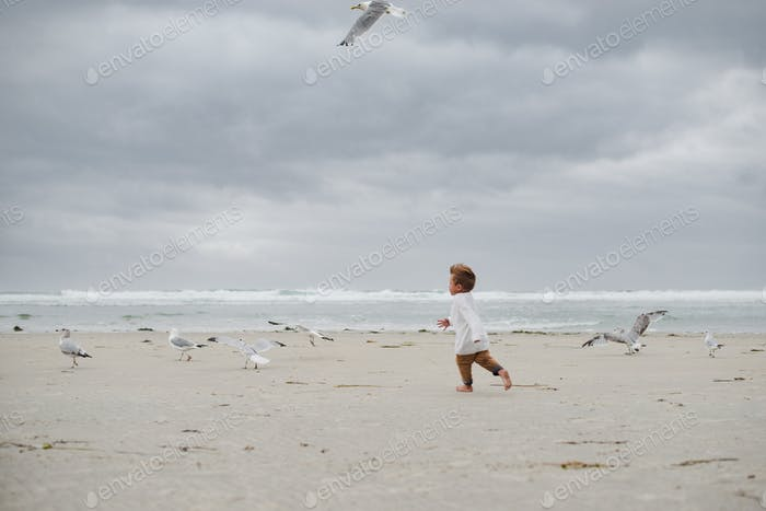 Little boy free as a bird feeling good watching the seagulls flying around him and running on the