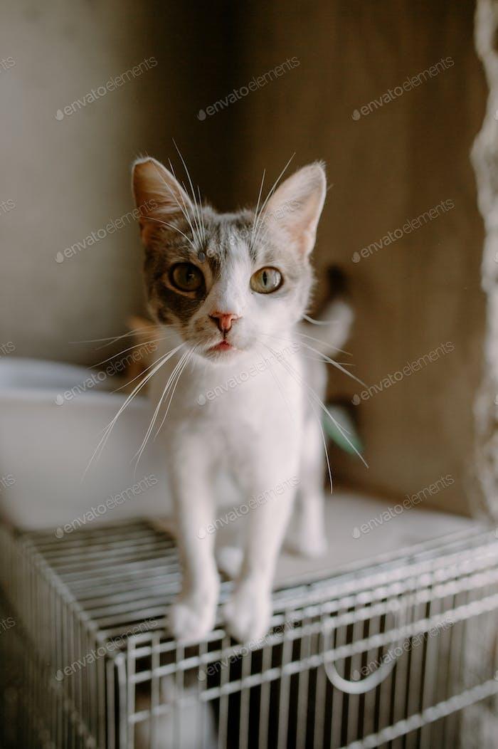 Gato en refugio, ayudar a los animales, caridad, filantropía, retrato de gato, en busca de casa