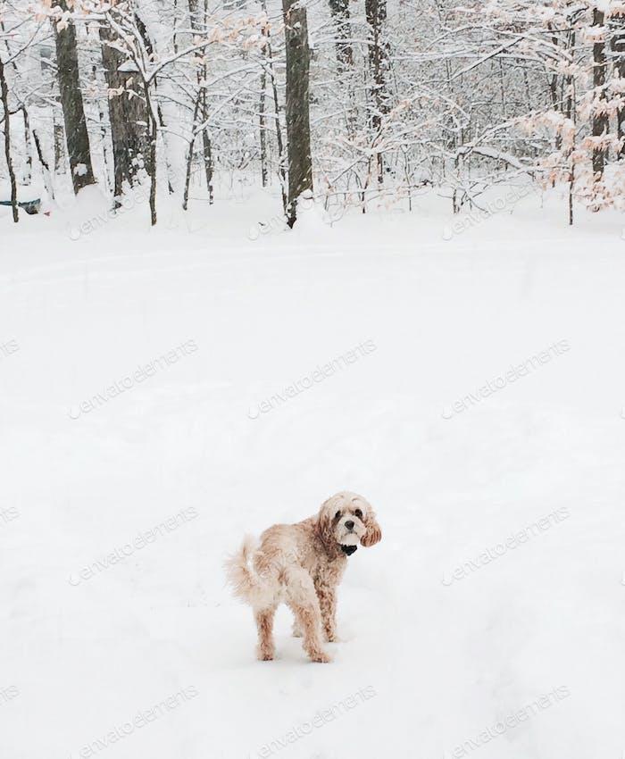 Snow Pup❄️
